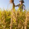 Giornate dell'Agricoltura a Valledolmo